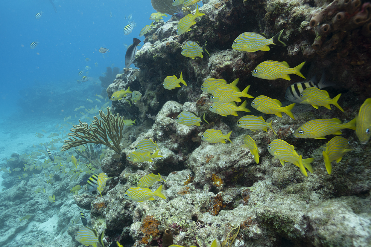 Development of Coral Nurseries to Restore Damaged Coral Reef Communities at Biscayne National Park