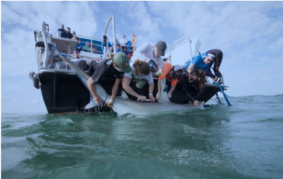 Bridging Stark County and Biscayne National Park – Championing Ocean Health Together