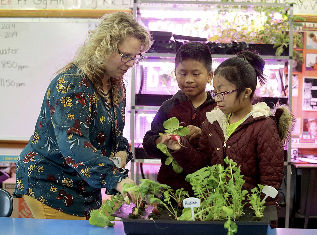 Lettuce Provide Massillon City Schools Indoor Gardens
